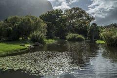 Jardín botánico de Ciudad del Cabo imagen de archivo