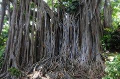 Jardín botánico de Deshaies en Guadalupe imagen de archivo libre de regalías