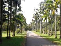 Jardín botánico de Gampaha Foto de archivo libre de regalías