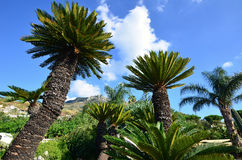 Jardín botánico de Giardini Ravino Fotografía de archivo libre de regalías