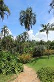 Jardín botánico de Inhotim Foto de archivo libre de regalías