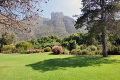 Jardín botánico de Kirstenbosch Fotos de archivo
