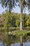 Jardín botánico de Montreal Imagen de archivo