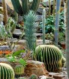Jardín botánico de Munich Fotografía de archivo