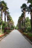 Jardín botánico de Nikitsky en Crimea Imagenes de archivo