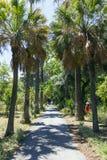 Jardín botánico de Palermo Imagen de archivo