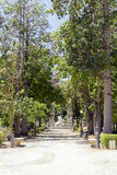 Jardín botánico de Palermo Fotos de archivo libres de regalías