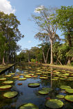 Jardín botánico de Pamplemousses Fotos de archivo libres de regalías