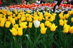 Jardín botánico de Pekín Fotos de archivo