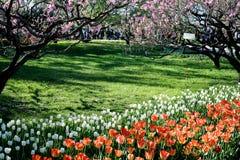 Jardín botánico de Pekín Foto de archivo