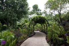 Jardín botánico de Singapur del camino imágenes de archivo libres de regalías