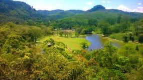 Jardín botánico de Sri Lanka Imágenes de archivo libres de regalías