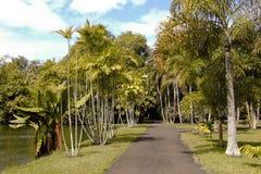 Jardín botánico de SRR (Pamplemousses, Mauricio) Foto de archivo