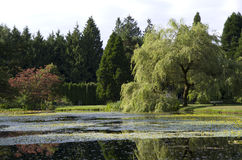 Jardín botánico de VanDusen Imagen de archivo libre de regalías