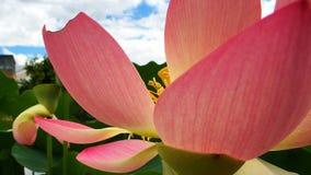 Jardín botánico de Wilhelma del flowerhead rosado fotos de archivo libres de regalías