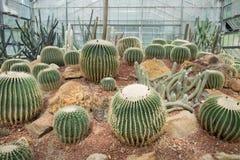 Jardín botánico del sirikit de la reina foto de archivo libre de regalías