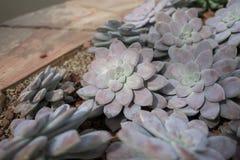 Jardín botánico del sirikit de la reina foto de archivo