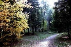 Jardín botánico en Akadem Gorodok Foto de archivo