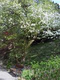 Jardín botánico en awice del 'de WojsÅ del arboreto foto de archivo libre de regalías