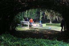Jardín botánico en Bogor Fotografía de archivo