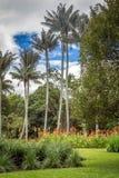 Jardín botánico en Bogotá, Colombia Foto de archivo libre de regalías