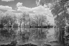 Jardín botánico en infrarrojo Imagenes de archivo