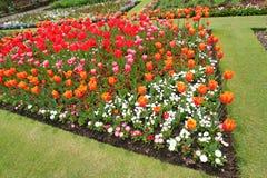 Jardín botánico en la floración Imagenes de archivo