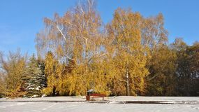 Jardín botánico en Lodz Foto de archivo