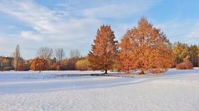 Jardín botánico en Lodz Foto de archivo libre de regalías