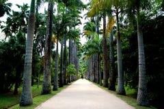 Jardín botánico en Rio de Janeiro Foto de archivo