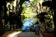 Jardín botánico en Rio de Janeiro Imagen de archivo