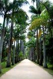 Jardín botánico en Rio de Janeiro Fotografía de archivo libre de regalías