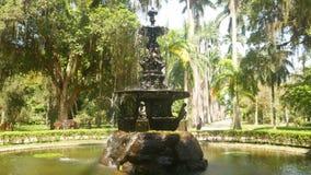 Jardín botánico en Rio de Janeiro metrajes