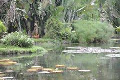 Jardín botánico en Rio de Janeiro, el Brasil Imagen de archivo libre de regalías