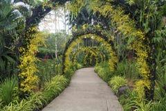 Jardín botánico en Singapur Foto de archivo libre de regalías