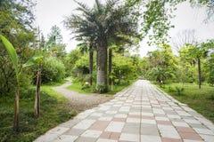 Jardín botánico en Sujumi Imagen de archivo libre de regalías