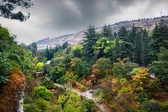 Jardín botánico en Tbilisi Imágenes de archivo libres de regalías