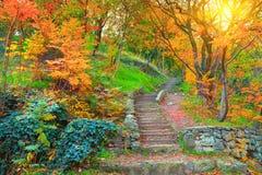 Jardín botánico en Tbilisi Imagen de archivo