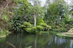 Jardín botánico hermoso del sao Miguel de Furnas Imagen de archivo