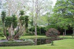Jardín botánico hermoso del sao Miguel de Furnas Imágenes de archivo libres de regalías