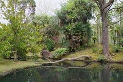 Jardín botánico hermoso del sao Miguel de Furnas Fotos de archivo
