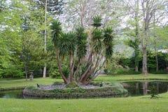 Jardín botánico hermoso del sao Miguel de Furnas Imagenes de archivo