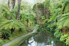 Jardín botánico hermoso del sao Miguel de Furnas Foto de archivo libre de regalías