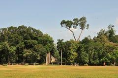 Jardín botánico, Kandy, Sri Lanka Foto de archivo libre de regalías