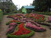 Jardín botánico muy hermoso con la planta floreciente foto de archivo libre de regalías