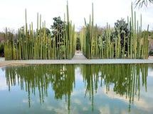 Jardín botánico Oaxaca México foto de archivo