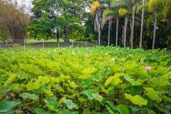 Jardín botánico Pamplemousses, Mauricio imagenes de archivo