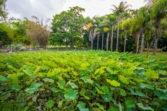 Jardín botánico Pamplemousses, Mauricio fotos de archivo libres de regalías