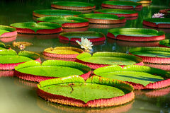 Jardín botánico, Singapur Fotografía de archivo