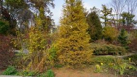 Jardín botánico vladivostok Rusia Imagenes de archivo